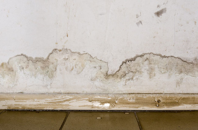 mold on wall and floor from flood