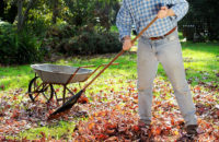 elderly man raking leaves in the fall