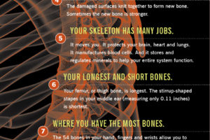 13 Strange and Interesting Facts About Your Bones – Health