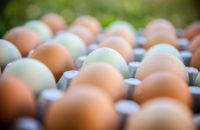 Which Label Matters Most When You're Buying Eggs?