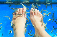 Fish Pedicures: This Trend Is More Than a Little 'Fishy'