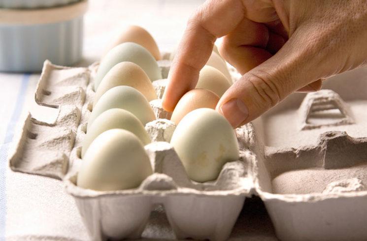 Selecting eggs from egg carton for heart healthy breakfast