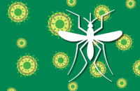 EEE virus borne by mosquitoes