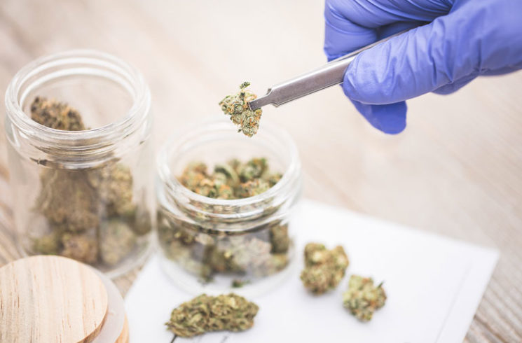 Cannubus buds being placed into medicine jar