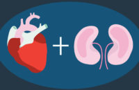Illustration of the heart and kidney relationship